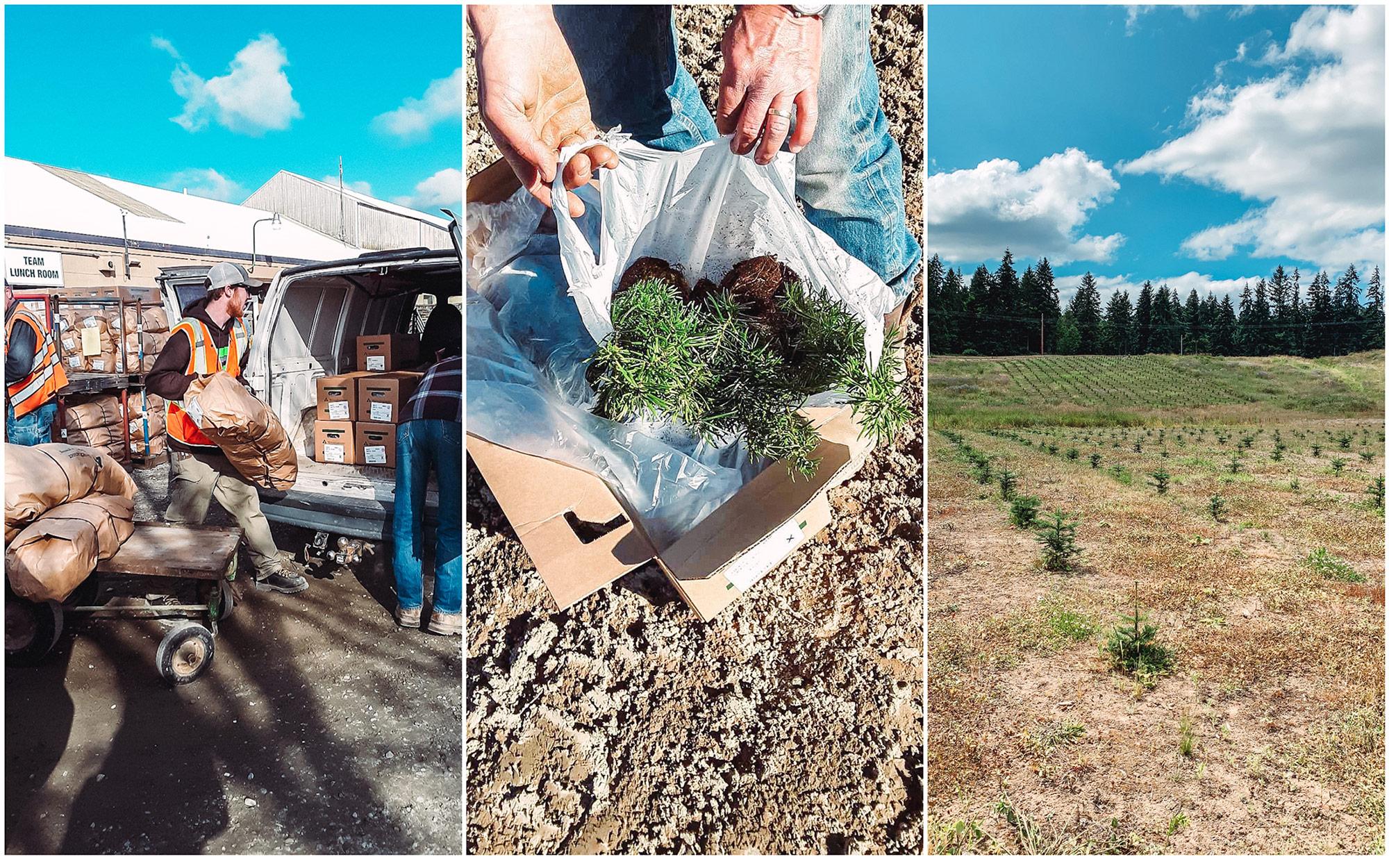 Edylnn Farm - Our Trees